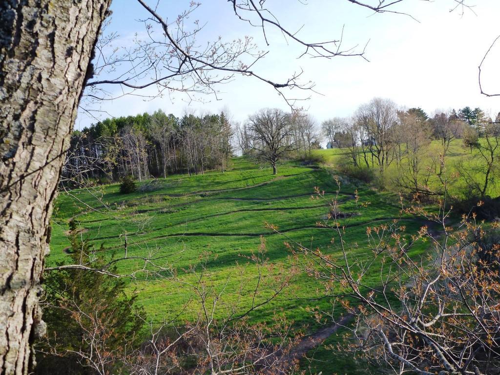 Hubbard Hills April '15